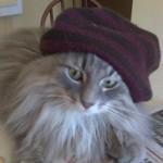 Wilson The Grunge Cat